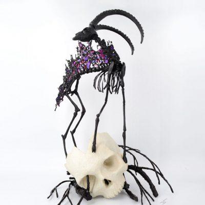 Bouquetin noir squelette et crâne grande taille